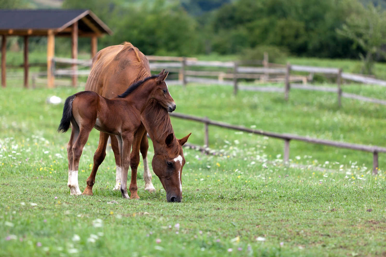 Horse with baby foal