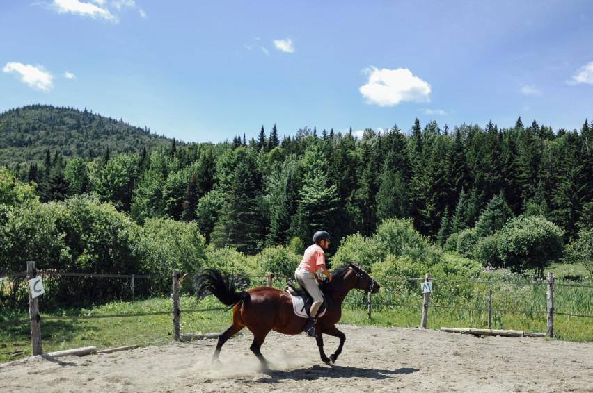 Horse training race